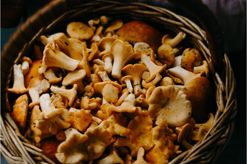 De kracht van paddenstoelen (en waarom je ze dagelijks zou moeten eten)